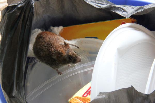 пришла мыша и ест не спеша