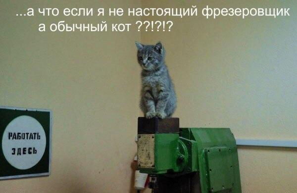 Кот фрезеровщик