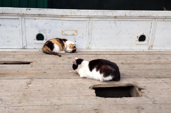 кошаки пригрелись в кузове, а вокруг гаражные псы