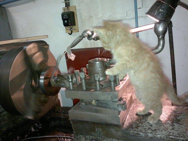 Кот токарь