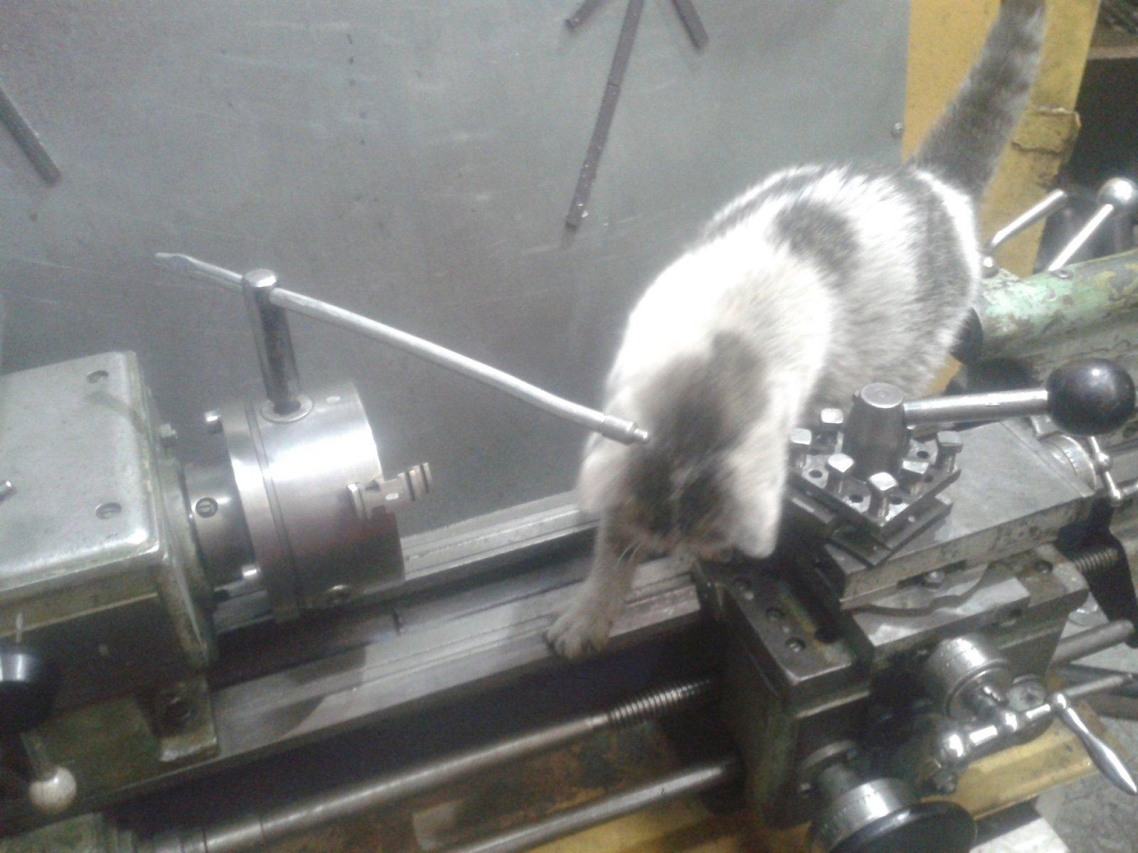 Котик обучается токарному делу