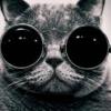 кот-учёный